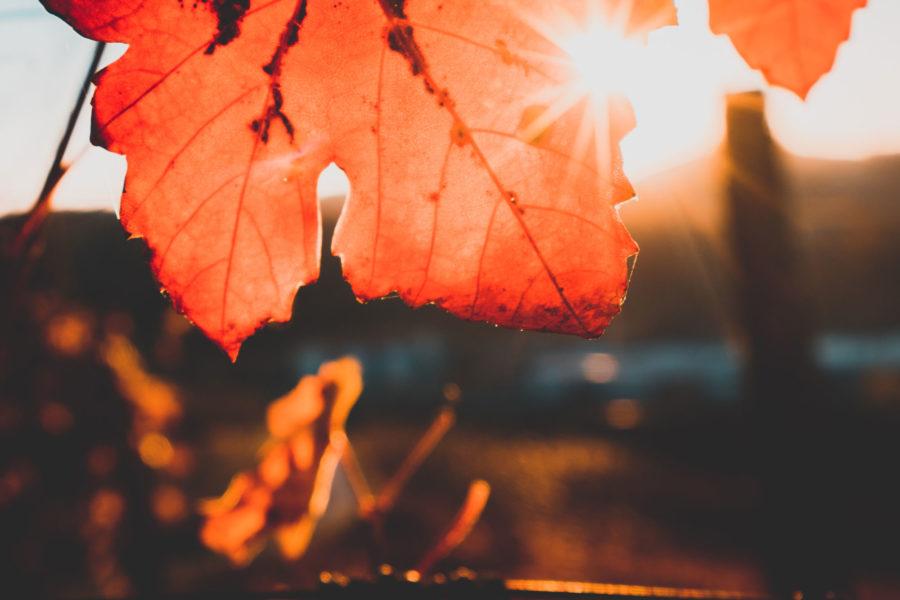 vinos para este otoño